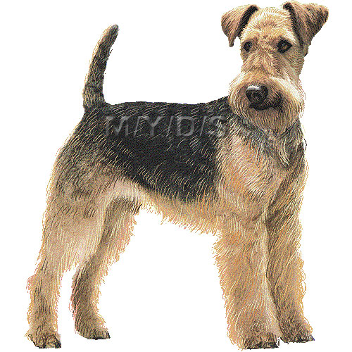 airedale terrier club of america - 550×550