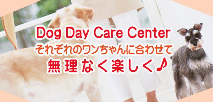 Dog Day Care 犬の保育園・幼稚園
