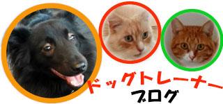 犬の保育園BLOG